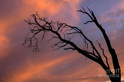 Pop Art Rights Managed Images - Magnolia Tree Silhouetted  Royalty-Free Image by Jim Corwin