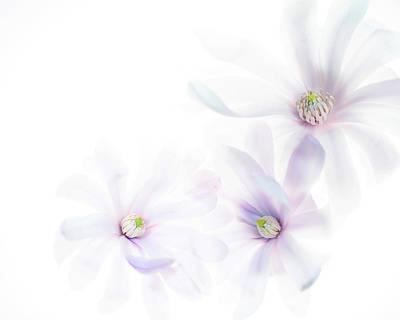 Photograph - Magnolia Trio by Rebecca Cozart