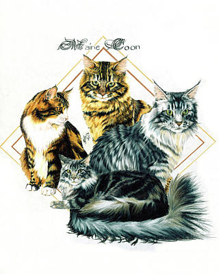 Drawing - Maine Coon by Barbara Keith