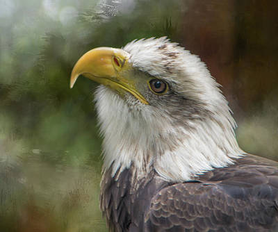 Photograph - Manwe The Bald Eagle by Marilyn Wilson