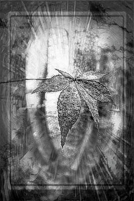 Photograph - Maple Leaf In Autumn Burst Of Light Black And White by Debra and Dave Vanderlaan