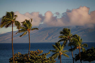 Photograph - Maui Palms by Jeff Phillippi