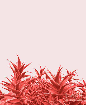 Photograph - Minimal Contemporary Creative Design With Aloe Plant In Coral Co by Jelena Jovanovic