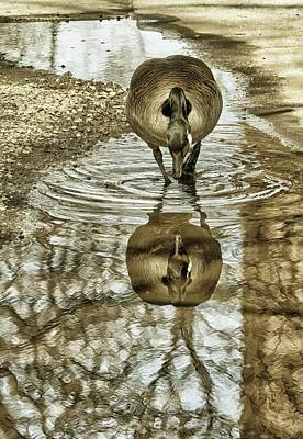 Photograph - Mirror Mirror by Cate Franklyn