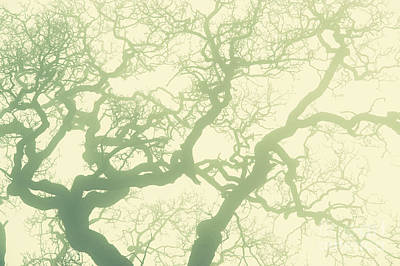 Photograph - Misty Oak Light by Tim Gainey