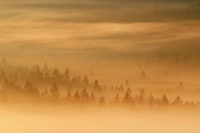 Photograph - Morning Mist In Forest, Isar Valley by Martin Ruegner