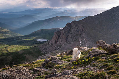 Photograph - A Mountain Goat's View by Richard Raul Photography
