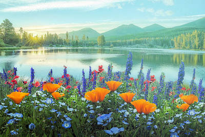 Photograph - Mountain Summer Blooms Misty Morning by Debra and Dave Vanderlaan