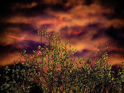 Photograph - Natural Light by Jorg Becker