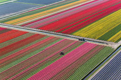 Photograph - Netherlands, Tulip Fields by Peter Adams
