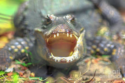 Photograph - Nile Crocodile Angry by Benny Marty