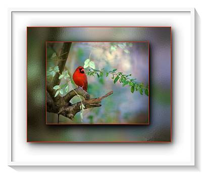 Photograph - Northern Cardinal by Robert L Jackson