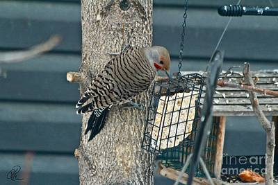 Photograph - Northern Flicker by Ann E Robson