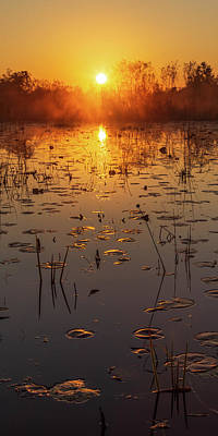 Photograph - Okefenokee Swamp Sunrise by Stefan Mazzola