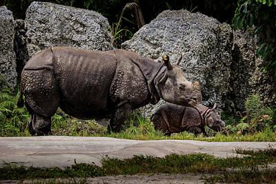 Railroad - One-Horned Indian Rhino Born at Zoo Miami  by Francisco Herrera