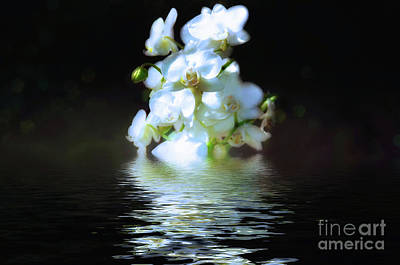 Photograph - Orchid Reflection by Elaine Manley