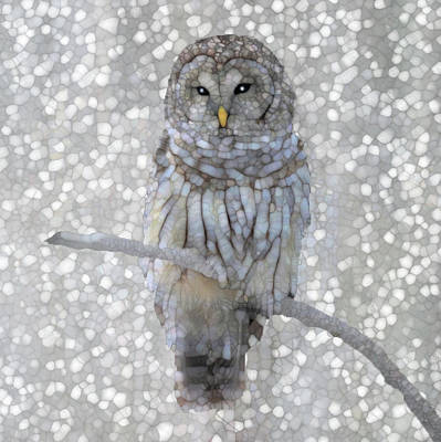 Night Hawk Wall Art - Painting - Owl by Jack Zulli