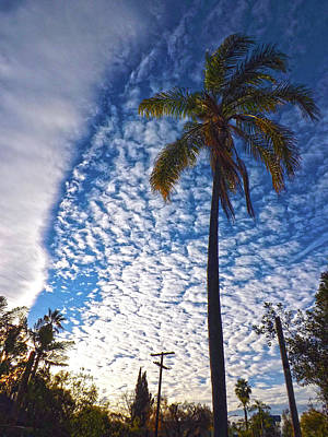 Photograph - Palm Tree And Clouds by Hold Still Photography