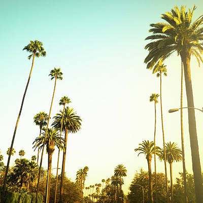Photograph - Palm Tree At Sunset On Beverly Hills by Franckreporter