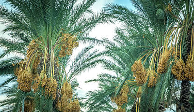 Photograph - Palm Tree With Fruit On Blue Sky Background by Alex Grichenko