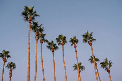 Photograph - Palm Trees At Sunset On Boulevard In Los Angeles by Alex Grichenko
