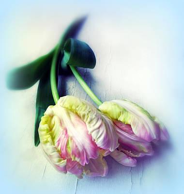 Photograph - Pastel Petals by Jessica Jenney