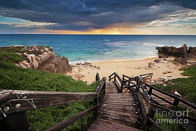 Photograph - Penguin Island by Auscape/uig