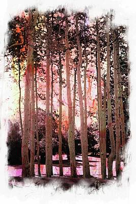 Photograph - Pine Forest by Marcia Lee Jones