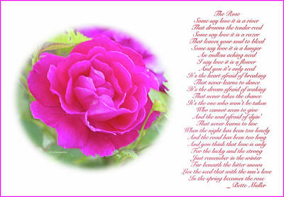 Digital Art - Pink Rose And Song Lyrics by A Gurmankin