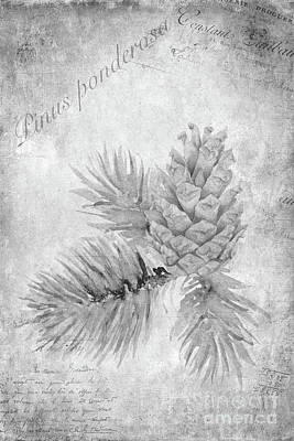 Pine Cones Wall Art - Painting - Pinus Ponderosa by John Edwards