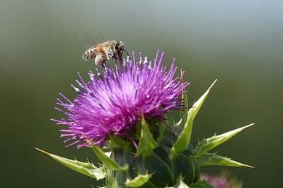 Photograph - Pollen Collector  by Fraida Gutovich