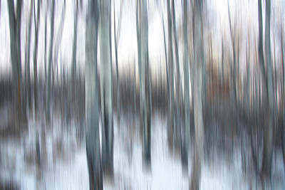 Photograph - Poplar Blur by Philip Rispin