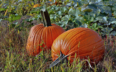 Photograph - Pumpkin Patch by Pat Cook