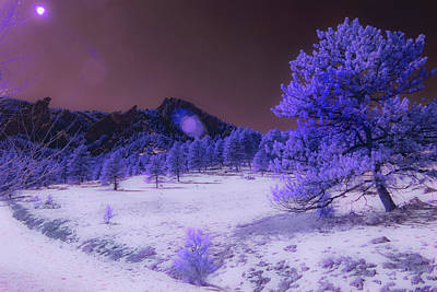 Photograph - Purple Majesty by Dan Urban