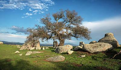 Photograph - Ramona Grasslands Tree by William Dunigan