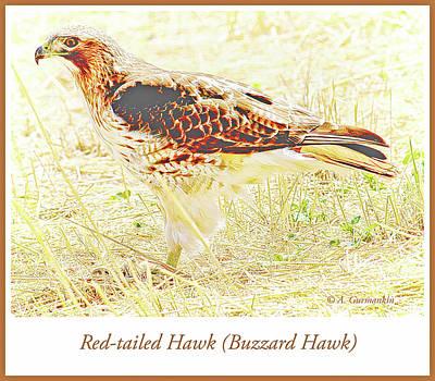 Photograph - Redtailed Hawk In A Field by A Gurmankin