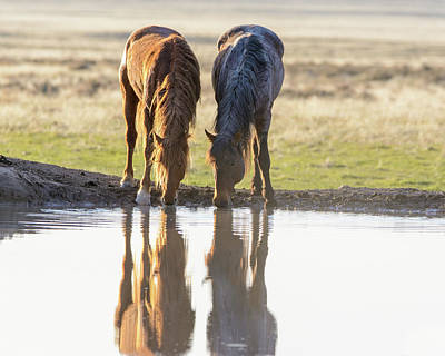 Photograph - Reflection by Mary Hone