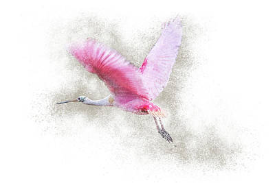 Photograph - Roseate Spoonbill Flight by Patti Deters