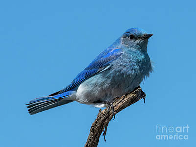Mountain Royalty-Free and Rights-Managed Images - Ruffled Blue by Mike Dawson