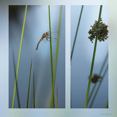 Photograph - Rushes And Dragonfly by Karen Rispin