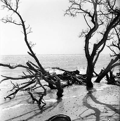 Photograph - Shoreline by Robert Natkin