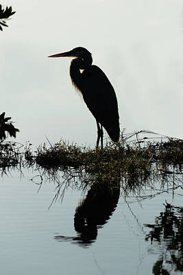 Photograph - Silhouette Of Heron by Dan Friend