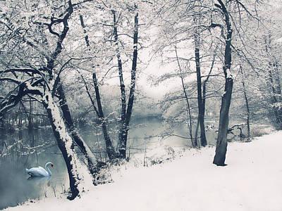 Photograph - Snow Pond by Jessica Jenney