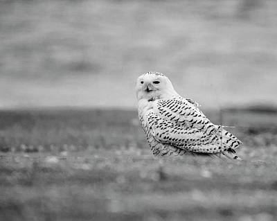 Photograph - Snowy Owl 5872 by Cathy Kovarik