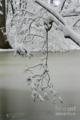 Photograph - Snowy Trees by TJ Fox