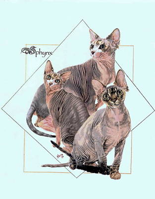 Drawing - Sphynx by Barbara Keith