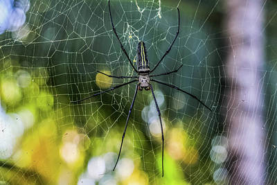 Wall Art - Photograph - Spider by Abd Hamid