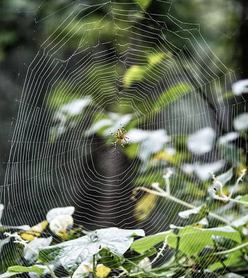 Photograph - Spider At Work by Paul Ross