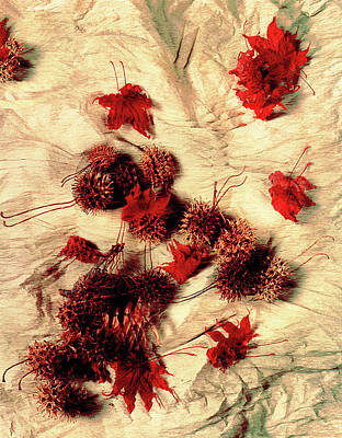 Photograph - Spiked Nuts Red by Roger Bester