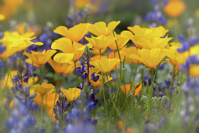 Photograph - Spring Wildflowers  by Saija Lehtonen